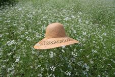 Free Straw Hat On The Flower Field Royalty Free Stock Photos - 24583708