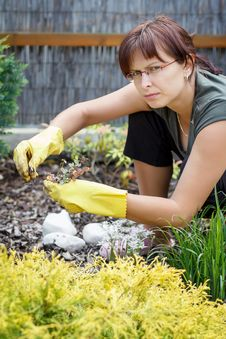 Free Middle Age Woman Gardening In Sunny Day Stock Image - 24589531