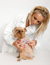 Free Veterinary Doctor And A Dog Stock Image - 24593251