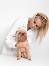 Free Veterinary Doctor And A Dog Stock Photography - 24593262