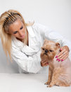Free Veterinary Doctor And A Dog Stock Photo - 24593270