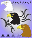 Free Eagle Royalty Free Stock Photo - 24596155
