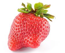 Free Fresh Ripe Perfect Strawberry Stock Photography - 24590812