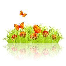 Free Green Meadow Stock Photos - 24596733