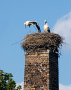 Free Two Storks Royalty Free Stock Images - 2465809
