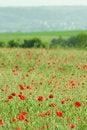 Free Poppy Field Close-up Stock Photo - 2466160