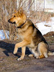 Free Dog Royalty Free Stock Image - 2461336