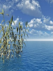 Free Water Plants Royalty Free Stock Photos - 2461448
