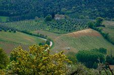 Free Italian Fields Royalty Free Stock Photos - 2462068
