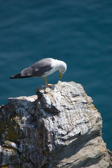 Free Gull Flying Over The Sea Royalty Free Stock Photos - 2463978
