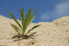 Free Imitation Of Desert Stock Photo - 2464040