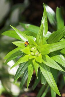 Free Ladybird Stock Image - 2465111