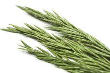 Free Green Grass Royalty Free Stock Photo - 2466165