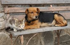 Free Cat And Dog Stock Images - 2467134