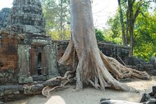 Banteay Kdei Tree Royalty Free Stock Photo