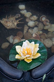 Small Decorative Pond Stock Photography