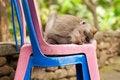 Free Sleeping Monkey Royalty Free Stock Photo - 24603675