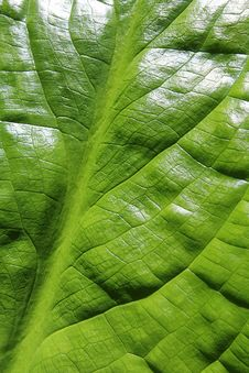 Free Bright Clean Green Leaf Stock Photos - 24600113
