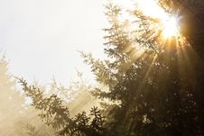 Free Golden Rays Of Sunlight Shining Through Trees Stock Photo - 24600190