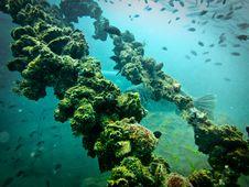 Free Sugar Wreck, Underwater Ship Royalty Free Stock Photo - 24600895