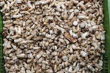 Free Mushroom Feet Stock Image - 24603321