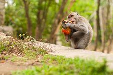 Free Monkey With Jam Stock Photos - 24603623