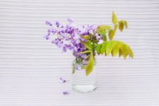 Free Flowers Of Wisteria Stock Photography - 24604212