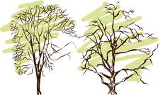 Free Tree Silhouette - Detailed Vector Stock Photo - 24606990