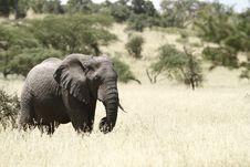 Free Savanna Elephant I Stock Photo - 24607640