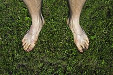 Free Bare Feet On Green Grass Royalty Free Stock Image - 24608266