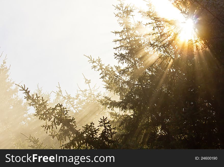 Golden rays of sunlight shining through trees