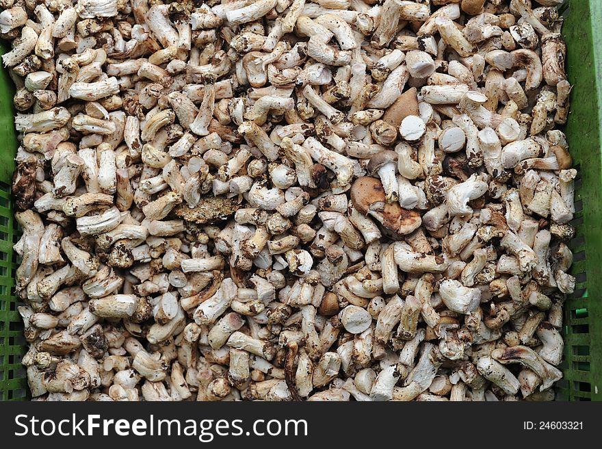 Mushroom feet