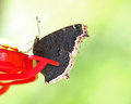 Free Butterfly Stock Photo - 24610300