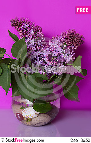 Free Bunch Of Violet Lilac Flower In Vase Stock Photography - 24613652