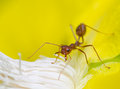 Free Macro Of Ant Stock Images - 24623134