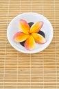 Free Frangipani Flower Stock Image - 24623481