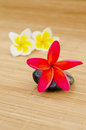 Free Red Plumeria Stock Photo - 24623490