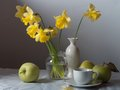 Free Daffodils Royalty Free Stock Photography - 24623607