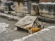 Famous Feral Pompeii Dog Stock Photography