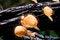 Free Orange Mushroom Stock Photo - 24627610