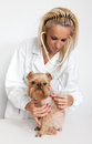 Free Veterinary Doctor And A Dog Stock Image - 24632871