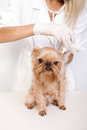 Free Veterinary Doctor And A Dog Stock Photos - 24632873