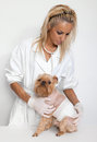 Free Veterinary Doctor And A Dog Stock Images - 24632874