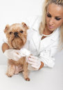 Free Veterinary Doctor And A Dog Royalty Free Stock Image - 24632876