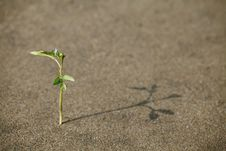 Free Sprout In The Sand Stock Photos - 24634983