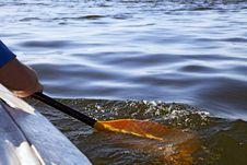 Free Kayaking Stock Image - 24635101