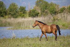 Free Draft Horses Stock Photos - 24645253