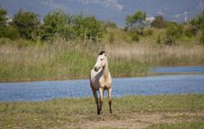 Free Draft Horses Royalty Free Stock Photo - 24645335