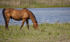 Free Draft Horses Royalty Free Stock Images - 24645369