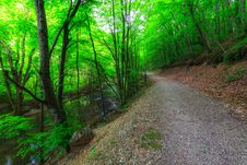 Free Beautiful Forest Scenery Royalty Free Stock Photo - 24649915